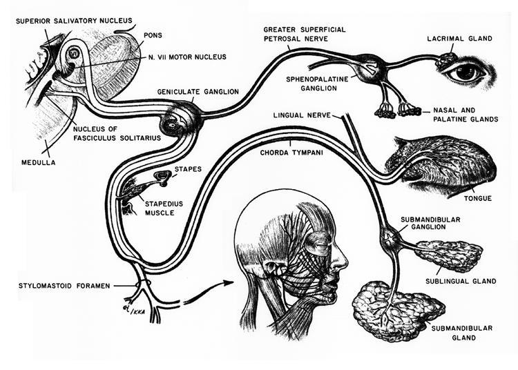 otology